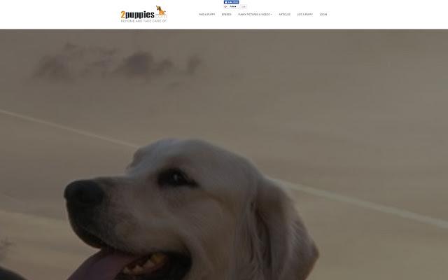 Dog for sale advertisments