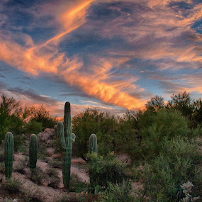 Tucson by Charlie Alolkoy - Landscapes Deserts ( sky, desert, tucson, cactus )