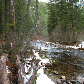 Rattlesnake Creek by Gregg Landry - Landscapes Forests ( nature, montana, trees, forest, missoula )