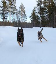 Photo: Varg og Ask