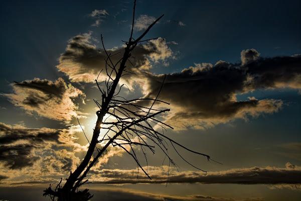 l'albero delle nuvole di dady2