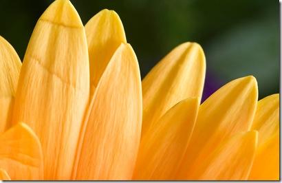 MSwanson - Wide - Flower 32