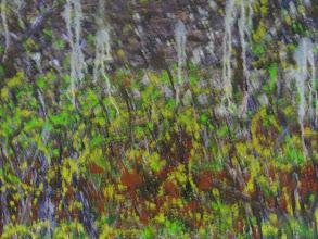Photo: Jellyfish Oil 100cmx150cm $600