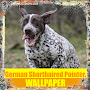 German Shorthaired Pointer Dog Wallpaper APK icon
