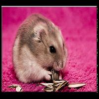 Download Hamster Live Wallpaper Free For Android Hamster Live Wallpaper Apk Download Steprimo Com If you like hamster follow me. hamster live wallpaper apk download