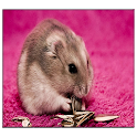 Hamster Live Wallpaper icon