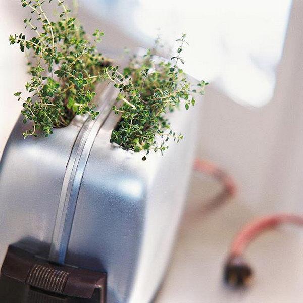 Clever Indoor Herb Garden Ideas