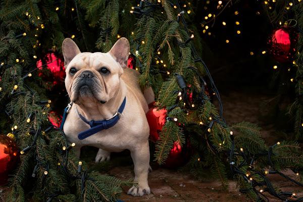 Bau Natale a tutti di Concetta Caracciolo