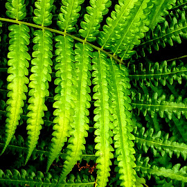 Ferms by Vijay Govender - Nature Up Close Other plants ( ferns, abstract )