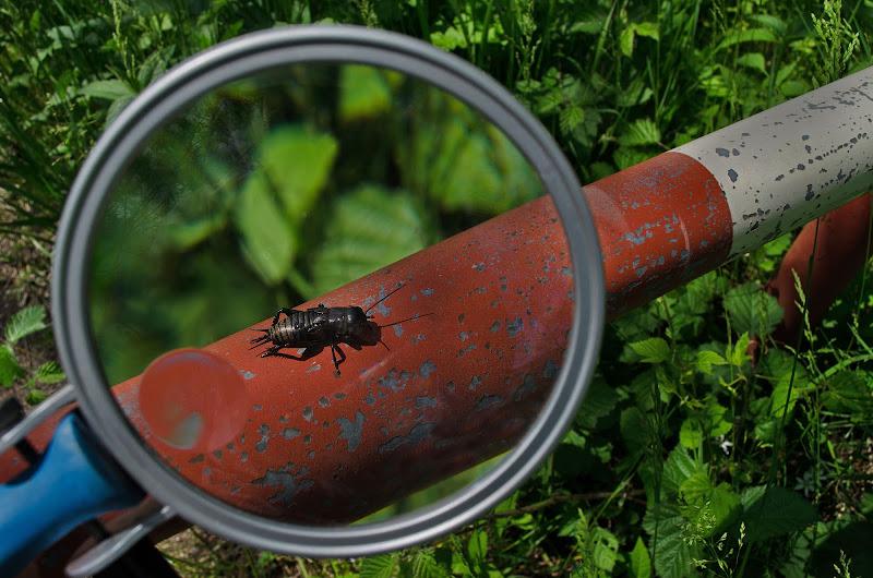 Lezione di entomologia di Moreno re