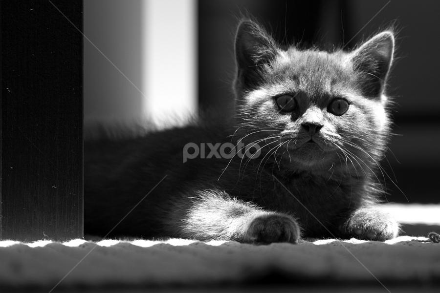 The Lighten One by Nuno Martins - Animals - Cats Kittens