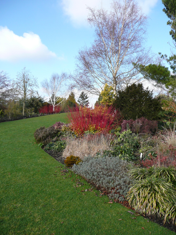 https://upload.wikimedia.org/wikipedia/commons/e/e0/Colourful_winter_border_at_Hyde_Hall_gardens_-_geograph.org.uk_-_1721933.jpg