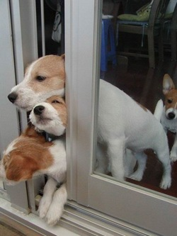 funny dogs picture