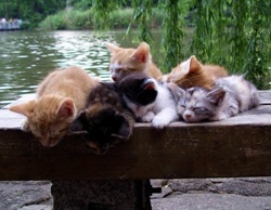 cats have a rest