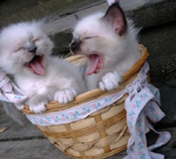 Funniest Pets: Funny kittens pictures