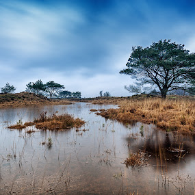 Pond in Calmpthout, Belgium by Wim De Koster - Landscapes Waterscapes