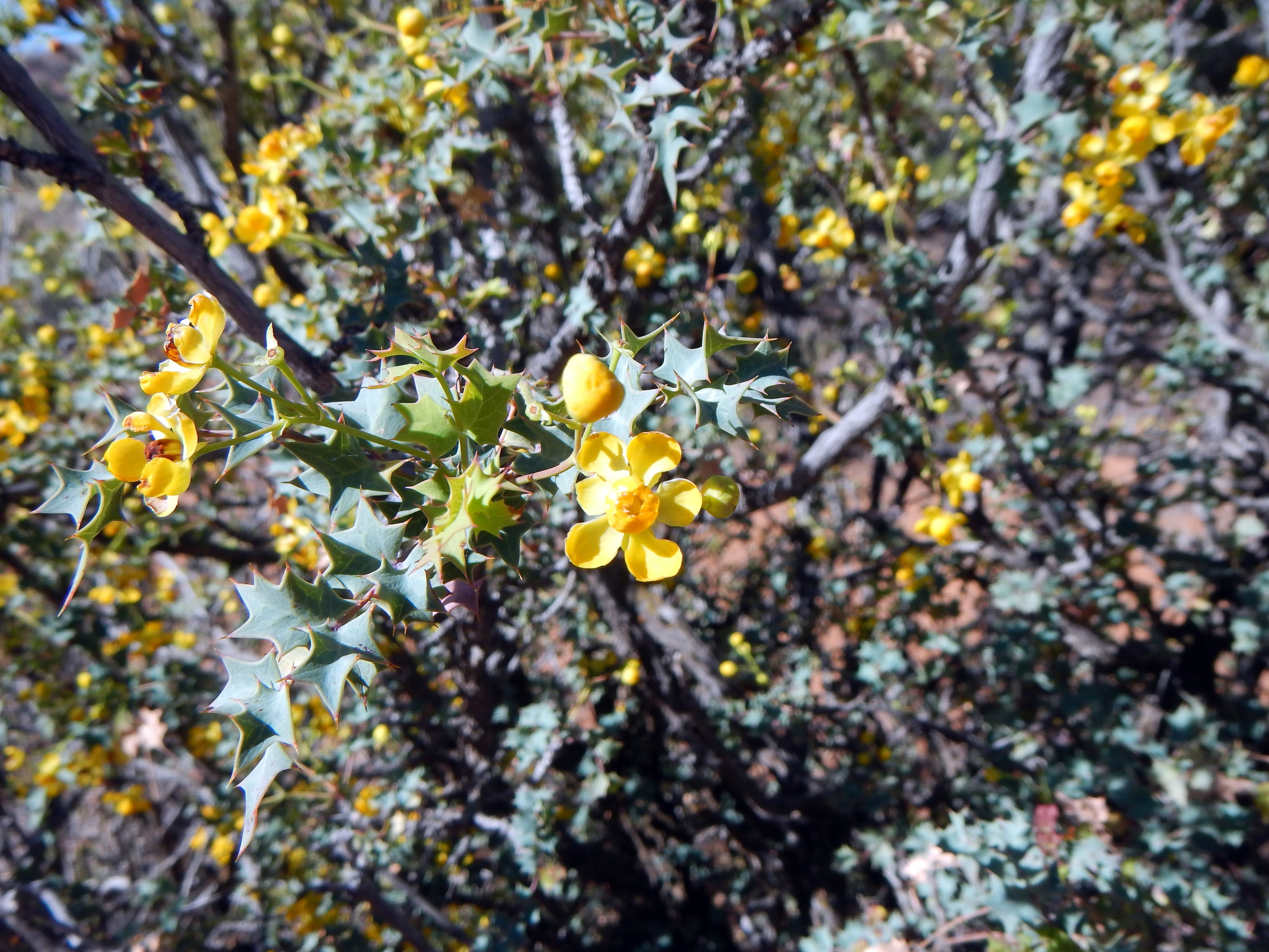 Photo: Pretty flowering shrubs with spiky leaves