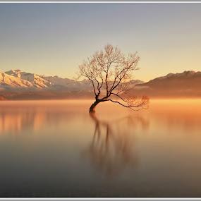 That Lone Tree by Jomy Jose - Landscapes Waterscapes ( lone tree, hannahsdreamz, that lone tree, jomy jose, lake wanaka, wanaka tree )