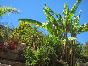Photo: Tropical vegetation.