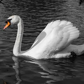 by Kiril Kolev - Animals Birds (  )