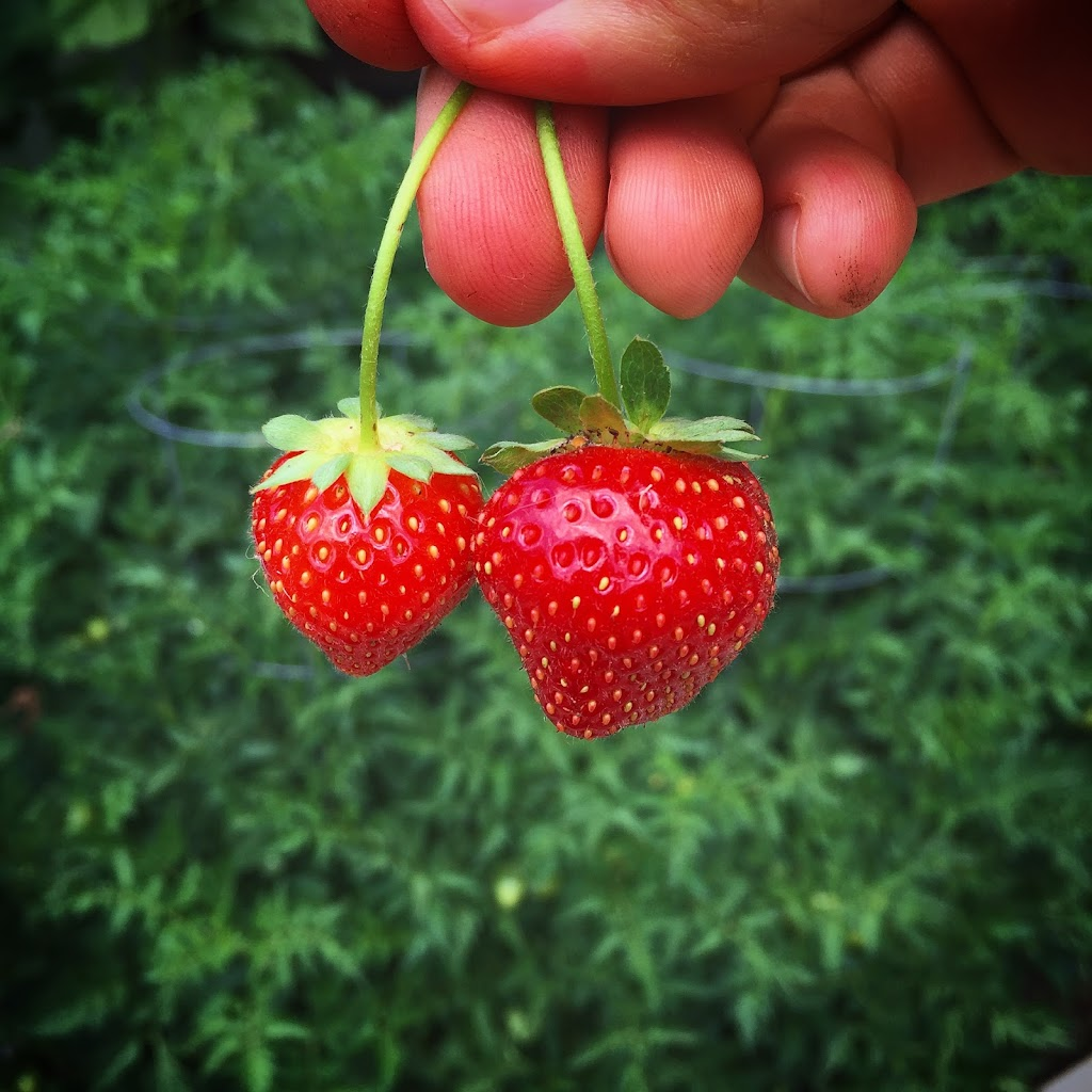 Okay, they're tiny, but they're still strawberries!