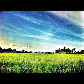 Sawah padi by Edio Pathic - Instagram & Mobile Instagram