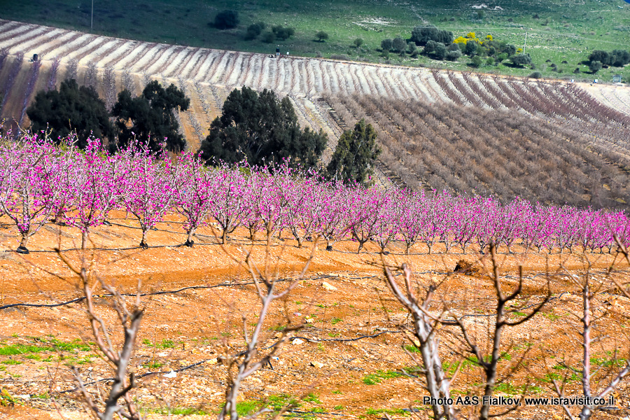 Пейзаж Галилеи весной.