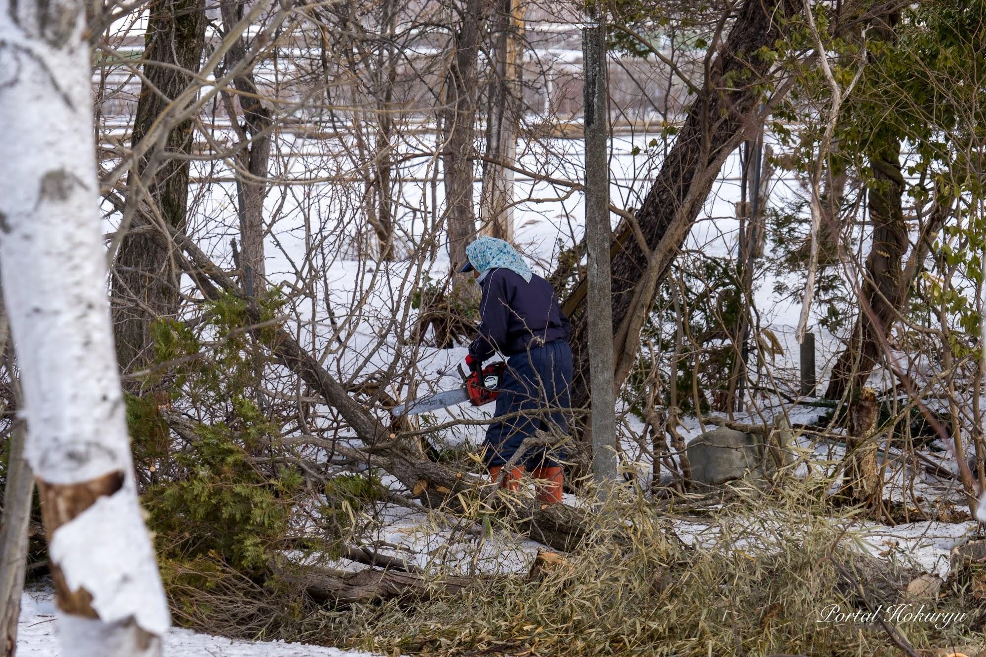 チェーンソーで一本一本伐採する木村さん