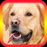 Translator for Dogs - Dog Translator