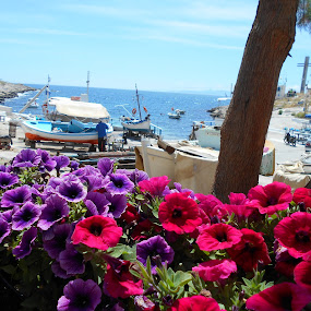 From Greece with love by Star Steel - Landscapes Beaches ( greece, sea, ships, flower,  )