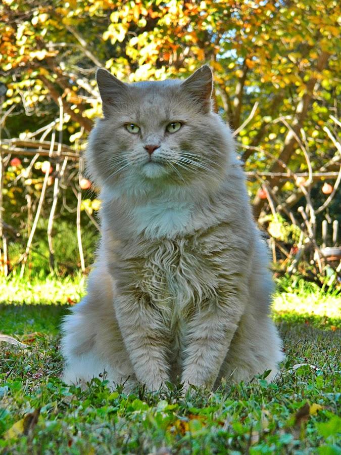 Butters by James Cole - Animals - Cats Portraits ( cats, cat, happy, cat portrait, catsofinstagram )