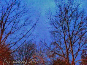 Photo: Trees on my street at dusk, so stately and calm.