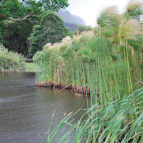 En die wind waai  by Lana Kirstein - Landscapes Waterscapes ( grasse water wind groen berg )