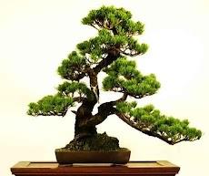 盆栽の木のアイデアのおすすめ画像4