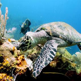 Roatan 2012 by Scott Mckay - Animals Sea Creatures