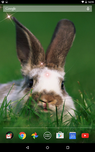 Cute Rabbit Live Wallpeper