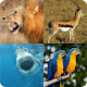 Guess the animal (game)