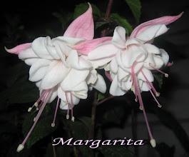Photo: Margarita