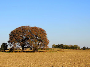 Photo: father, mother ...?  #tree  #treesphotography  #autumn  #field  #landscapephotography // +Landscape Photography #hqsplandscape // +HQSP Landscape