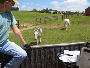 Photo: Donkey wanted to follow