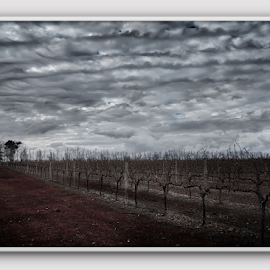 Vines by Greg Tennant - Digital Art Places ( vines, clouds, trees )