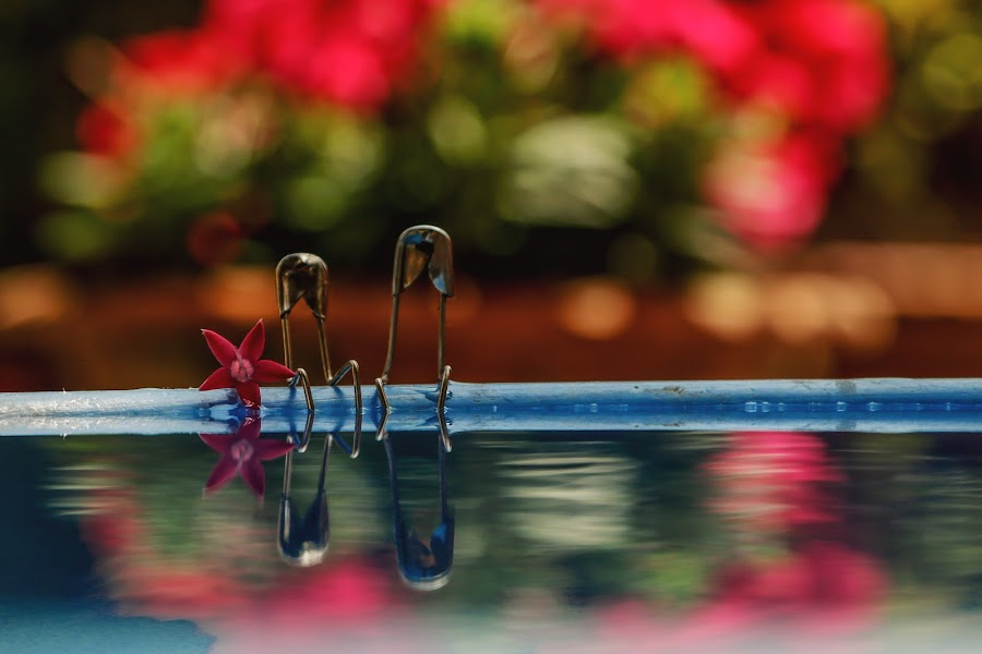 ROMANCE by Rajendra P Ghosh - Artistic Objects Still Life ( water, colourful, creative, pool, still life, romantic, couple, flower )