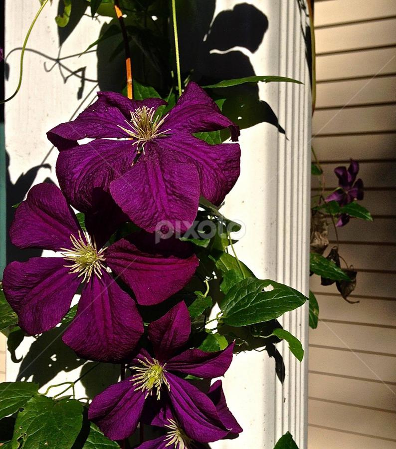 by Sunni Davis - Flowers Flower Gardens (  )