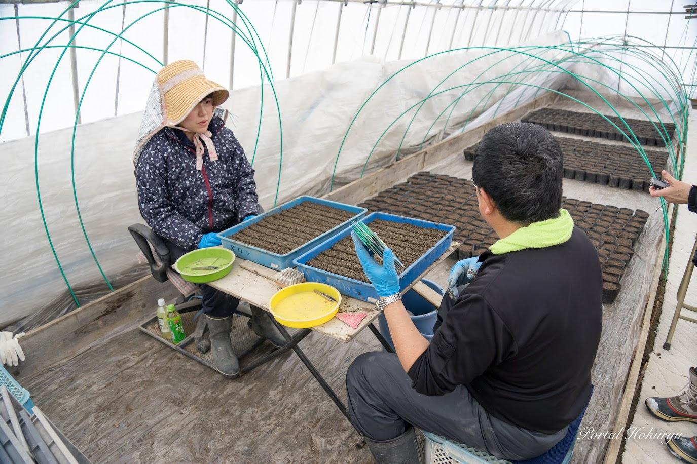 昨年の農業実習生、現在渡邊隼斗さんのお嫁さんになった美香さん初体験