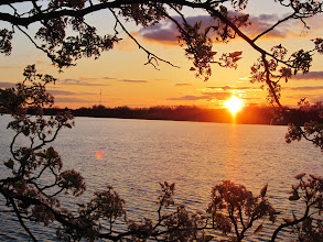 Photo: Pretty pear blossoms and sunset on a lake at Eastwood Park in Dayton, Ohio.