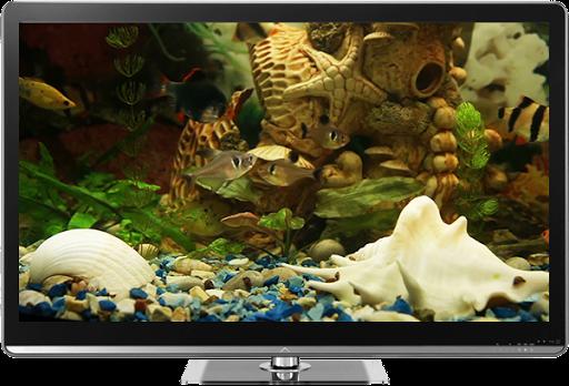 Fish Tank on TV via Chromecast