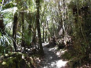 Photo: Alrededores de Punakaiki: Rain Forest