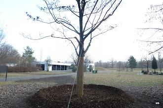 Photo: dornhaldenfriedhof, eingang rechts: ersatzbaum?