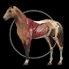 Horse Anatomy: Equine 3D - Androidアプリ
