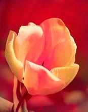 Photo: You Make Me Blush